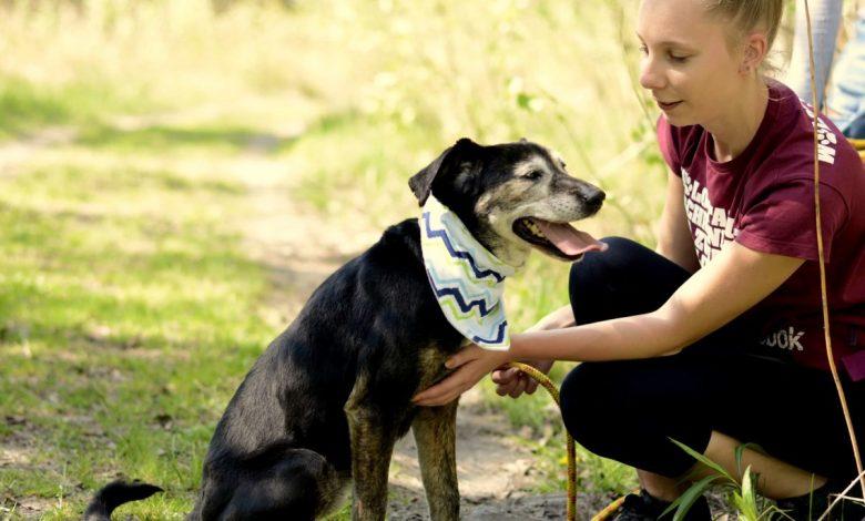 Młoda dziewczyna głaszcze zadowolonego psa